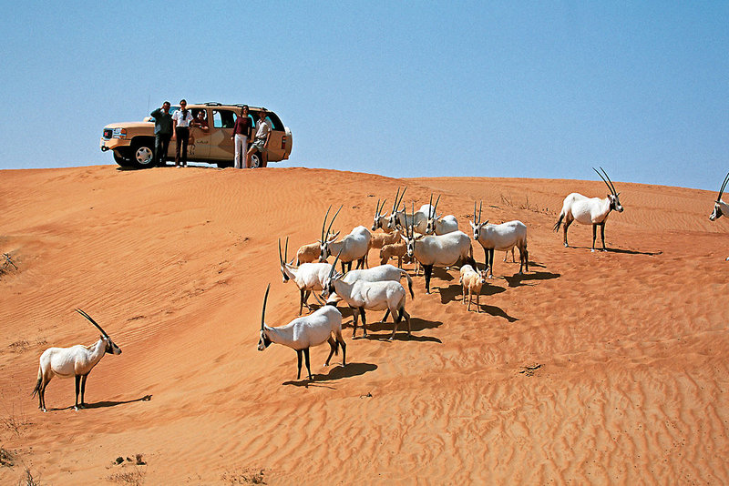 Al Maha (Dubai Desert Conservation Reserve) ab 3295 € 4
