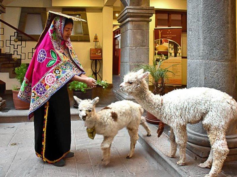 Imperial Cusco Hotel Tiere