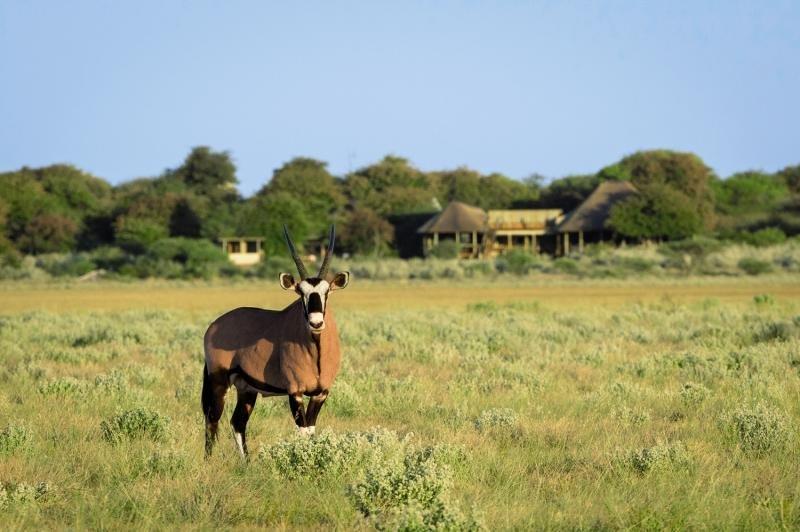 Kalahari Plains Camp Tiere
