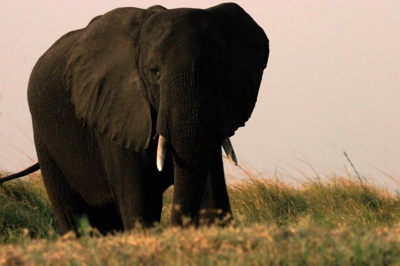 Chobe Safari Lodge Tiere