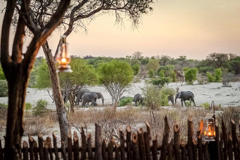 Tuskers Bush Camp Tiere
