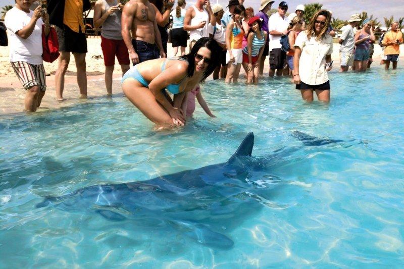 RAC Monkey Mia Dolphin Resort Pool