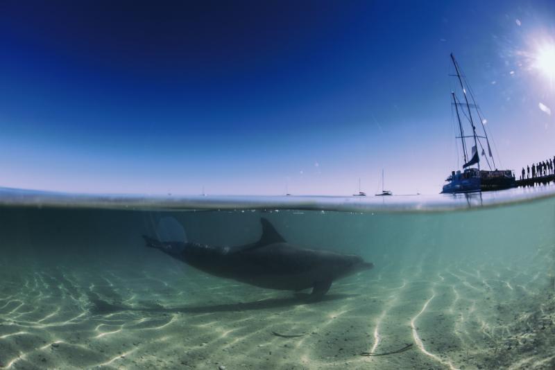 RAC Monkey Mia Dolphin Resort Landschaft